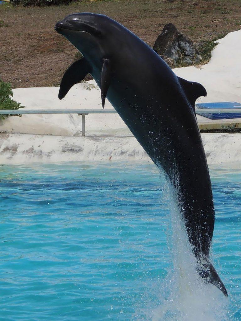 вольфин