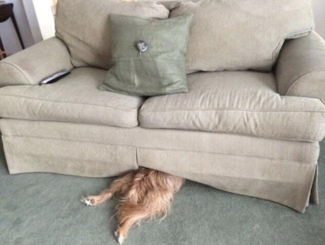 пес под диваном