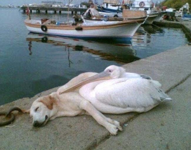 собака и птица