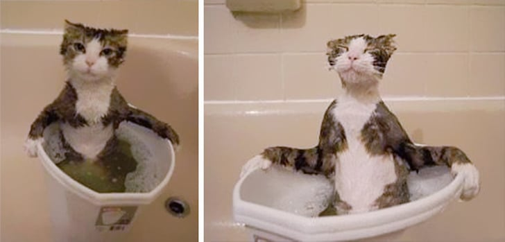 Котики — наше всё: 10+ морд, которые поднимут настроение в самый грустный день Приколы,Фото,коты,коты фото,подборка фото,смешные коты