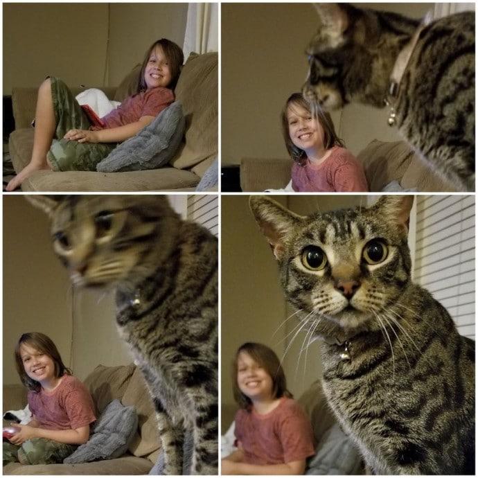 мальчик и полосатый кот