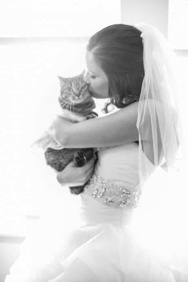 кот с невестой
