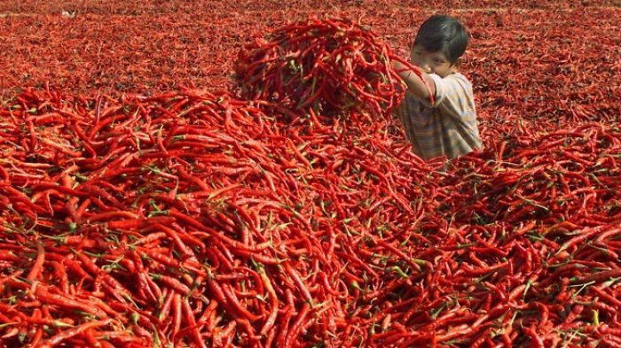 мальчик в груде красного перца
