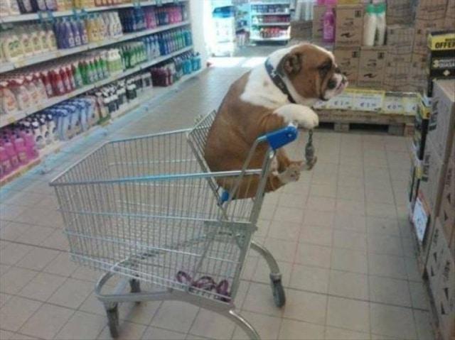 пес в тележке