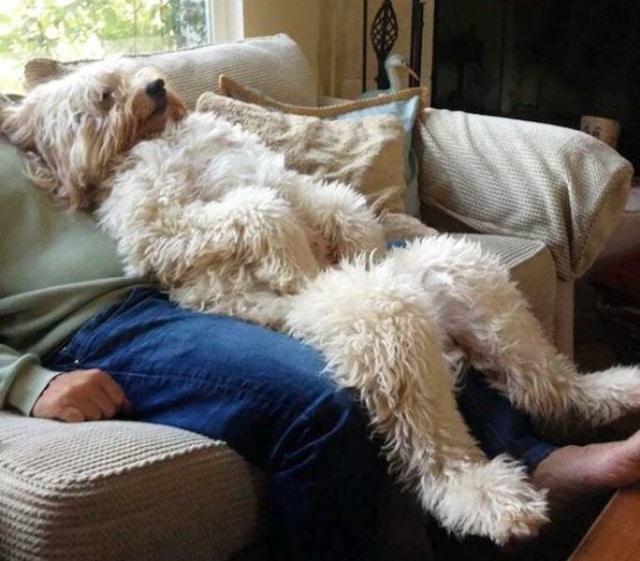 пес спит с хозяином