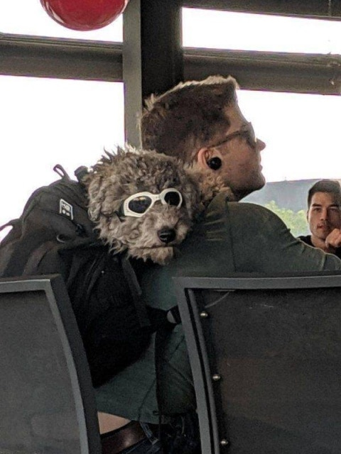 пес со своим хозяином