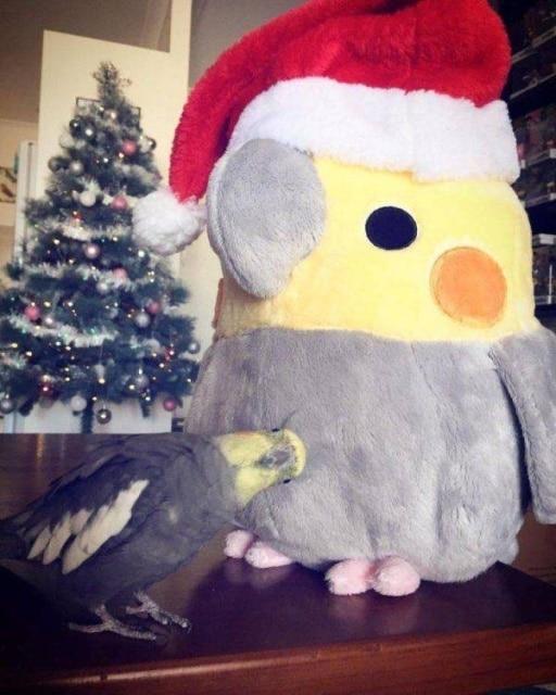 попугай с мягкой игрушкой