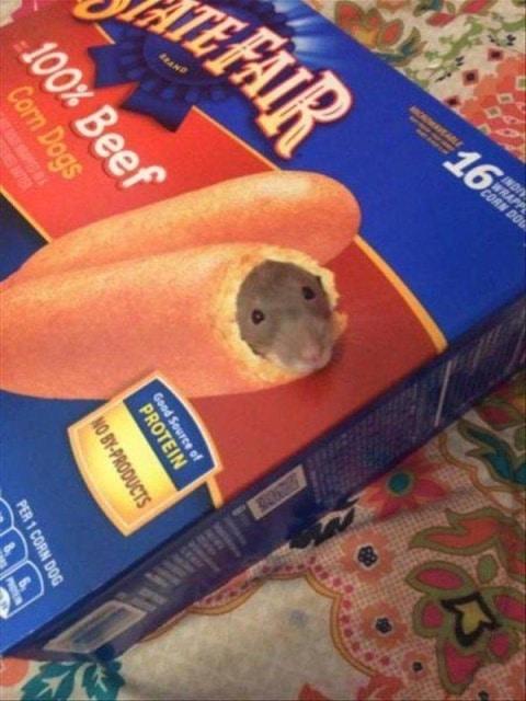 крыса и коробка