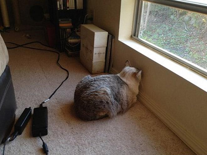 кот сидит под окном