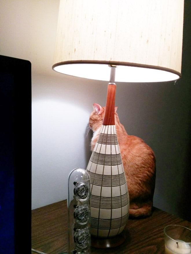 рыжий кот за лампой