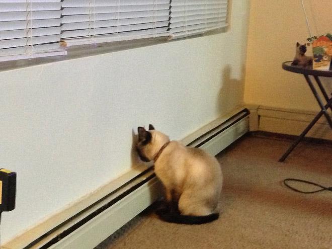 кот сидит у стены