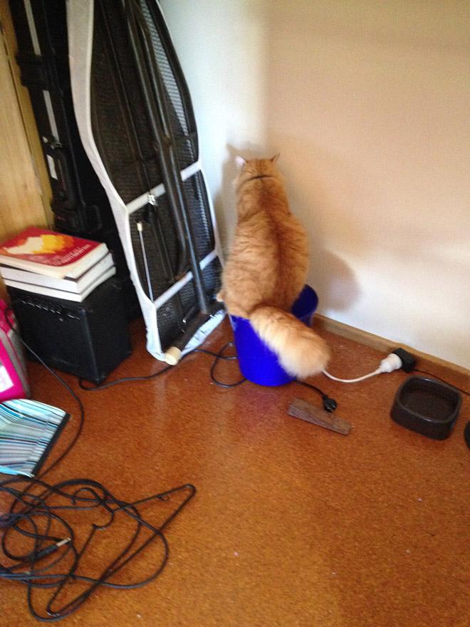 рыжий кот сидит в углу
