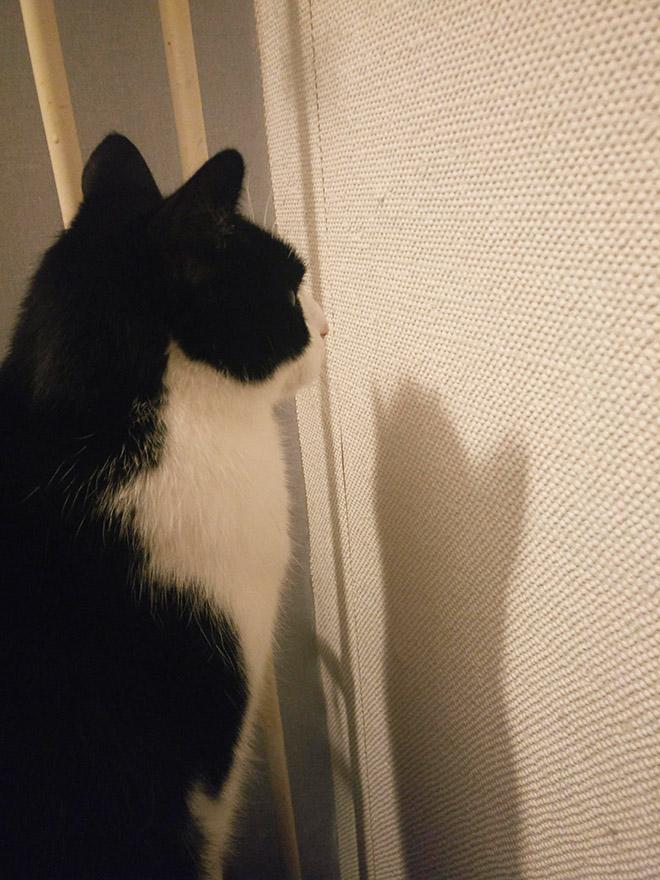 черно-белый кот перед стеной