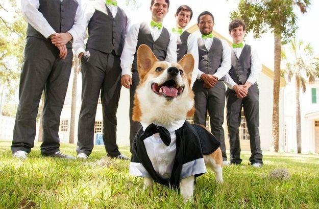 собака и мужчины