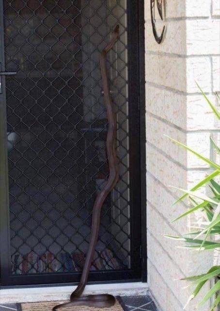 змея ползёт по двери