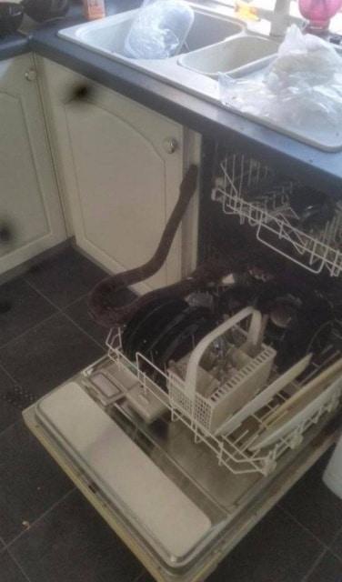 змея в посудомойке