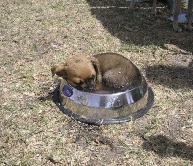 щенок спит в миске