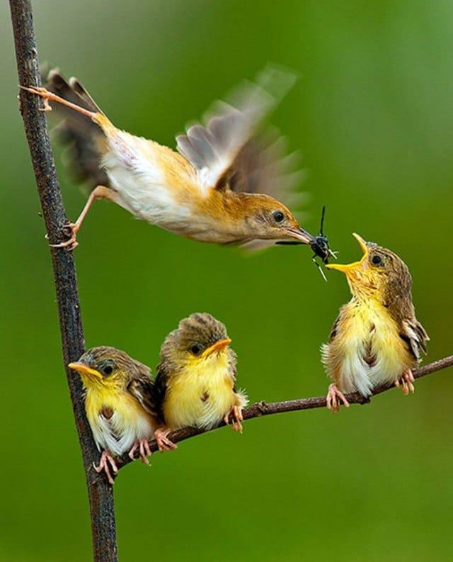 птенцы на ветке