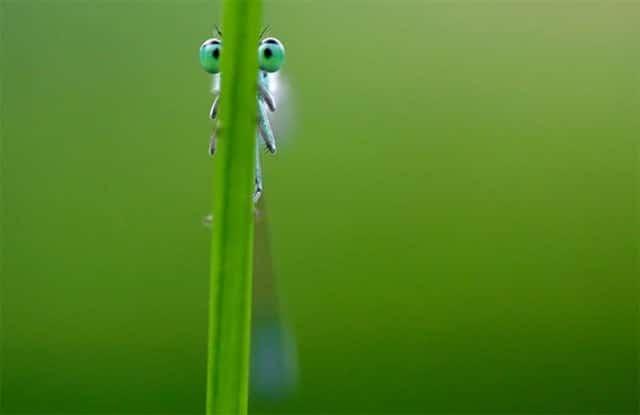 насекомое прячется в траве
