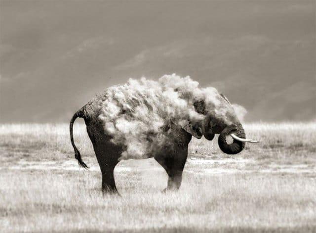 слон в облаке пыли