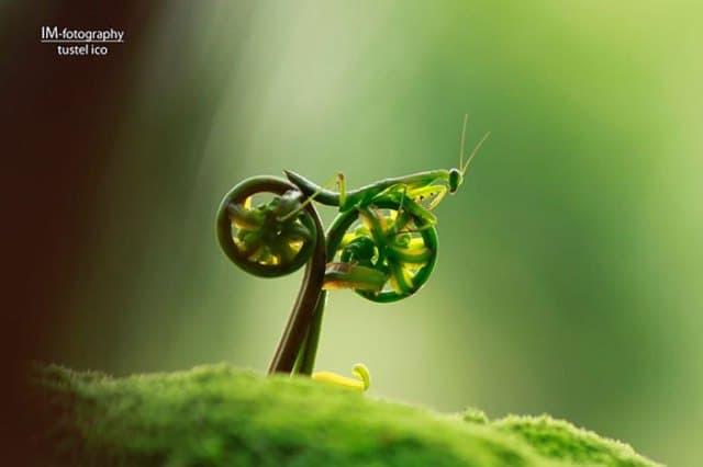 богомол на велосипеде