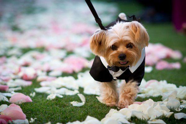 нарядный пес