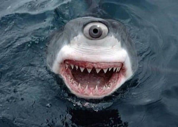 акула с одним глазом