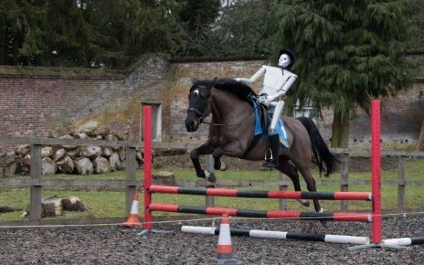 всадник на лошади